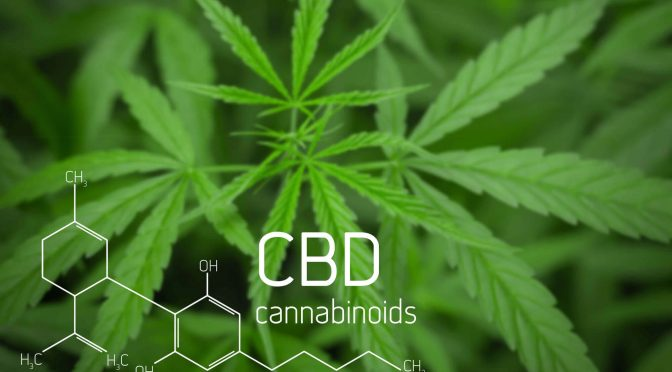 CBD Billion Dollar Business